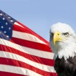 American Eagle — Stock Photo #27526465