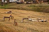 Wooden Horses — Stock Photo