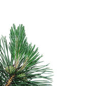 Tree on a white background — Stock Photo