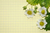 Buds and flowers berries on yellow paper — Stock Photo