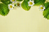 Green leaves and white flowers on a background of strawberries notebook sheet — Stock Photo