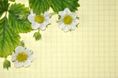 Leaves, buds and white flowers strawberries on a yellow background — ストック写真