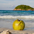 Stock Photo: Coconut on the beach
