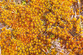 Bright colored moss macro — Stockfoto