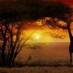 Africa Sunset — Stock Photo #26574261