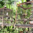 Stock Video: Red-whiskered Bulbul in birdcage at countryside