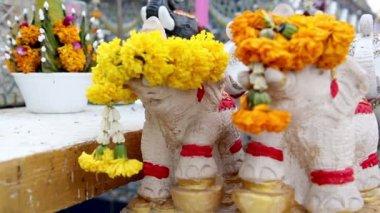 Petites poupées animale en face de la statue de bouddha — Vidéo