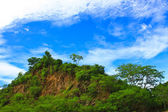 Skał i drzew — Zdjęcie stockowe