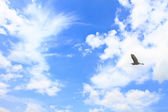 Flying Great White Egret with blue sky background — Stock Photo
