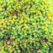 Green moss on the trunk of tree  — Stock Photo
