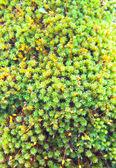 Verde musgo no tronco da árvore — Fotografia Stock