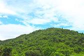 Rocks and trees of the Kaengkrachan National Park — ストック写真
