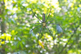 Large tropical spider - nephila (golden orb) — Stock Photo