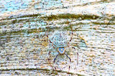 White spider — Stock Photo