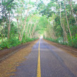 Road under green tree tunnel — Stock Photo #35402833