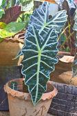 Liść zielony — Zdjęcie stockowe