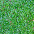 Stock Photo: Green grass field background