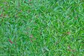 绿草场背景 — 图库照片