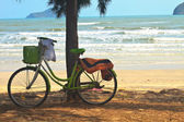 Bicycle with tree at the beach — Stock Photo