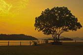 Tree and Sunset at lake — Stock Photo