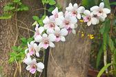 蘭の花の庭 — ストック写真