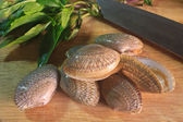 Surf clam on wooden for cooking     — Stock Photo