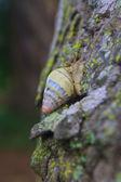 Snail on the trunk tree — Stock Photo