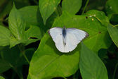 Beautiful Butterfly on leaf — Stock Photo