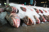 A groups of fishes ready for Wholesale in fish market in Thailand — Stock Photo