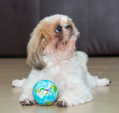 Portrait of a dog play the world ball — Стоковое фото