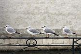 Birds on a fence — Stock Photo