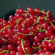 Redcurrant — Stock Photo