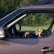 Two dachshund dog look out the car window — Stok fotoğraf