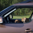 Two dachshund dog look out the car window — Stock Photo