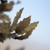 Dry leaves on a tree — Foto Stock