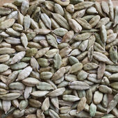 Cardamom seeds closeup — Stock Photo