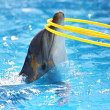Stock Photo: Dolphin with hula-hoop