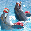 Dolphins with a ball — Stock Photo