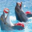 Delfíni s míčem — Stock fotografie