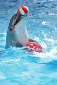 Dolphin with a ball — Stock Photo
