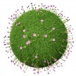 Grass ball with pink flowers — Stock Photo