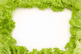 Frame made of salad — Stock Photo