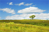 Lone Tree With Blue Sky In Blueberry Field Maine Photograph — Stock Photo