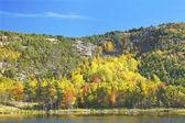 Fall Beaver Dam Pond Acadia National Park Maine — Stock Photo