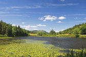 Lily Pads on Long Pond Acadia National Park Maine — Stock Photo