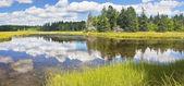 Bass Harbor Marsh In Summer Acadia National Park Maine — Stock Photo