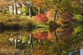 Asticou Azelea Garden Fall Mount Desert Island Maine — Stock Photo