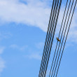 Doves on power lines in summer day — Stock Photo