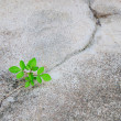 Growing plant on Cement — Stock Photo