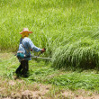 Lawn mower worker cutting grass in green field — 图库照片